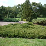 Location: Michigan State University Hidden Lake Garden, Tipton, MIDate: 2011-09-12