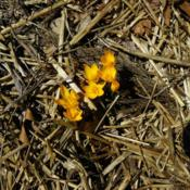 Location: Long Island, NY Date: 2014-03-24