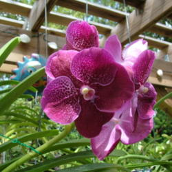 Thumb of 2014-09-01/orchidsbud/a85dfc