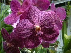 Thumb of 2014-09-01/orchidsbud/ebbef3