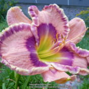Location: My Garden- VermontDate: 2014-09-02FFO - Sept. Bloom