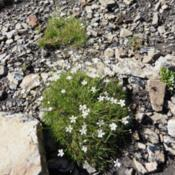 Location: Terwhytt Cirque, Kananaskis Country, AB, Canada; alpine elevation.Date: 2014-08-18
