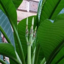 Thumb of 2014-09-14/ShadyGreenThumb/96b539
