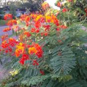 Date: SummerGreat combination with native lantana (horida)