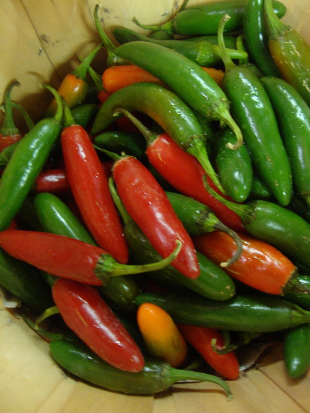 Photo of Hot Pepper (Capsicum annuum 'Serrano') uploaded by Paul2032
