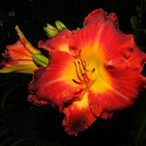 Quite a bright daylily. I found it hard to photograph because the