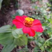 Location: my garden Date: 2014-09-05