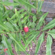 Location: my garden Date: 2014-09-23