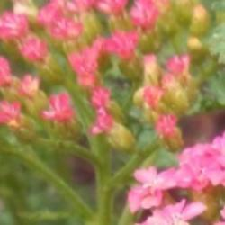 Thumb of 2014-09-28/Catmint20906/7d58be
