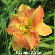 Location: Saratoga Springs NYDate: 2014-07-23Beyond Riches