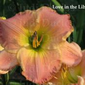 Location: Saratoga Springs NYDate: 2014-07-23Love in the Library