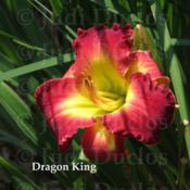 Location: Saratoga Springs NYDate: 2014-07-25Dragon King