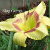 Location: Saratoga Springs NYDate: 2013-07-20King George