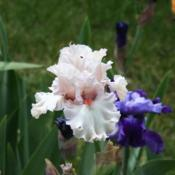 Location: My garden in southeast NebraskaDate: 2014-05-25