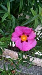 Thumb of 2014-10-20/evelyninthegarden/83f47c