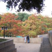 Location: Fort Worth, TxDate: Fall, 2007
