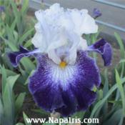 Date: 2013-01-20Photo courtesy of Napa Country Iris Garden