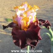 Date: 2013-12-15Photo courtesy of Napa Country Iris Garden