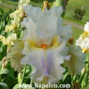 Date: 2006-05-02Photo courtesy of Napa Country Iris Garden