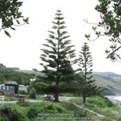 Location: New ZealandDate: 2012-01-07