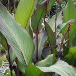 Thumb of 2014-12-26/FleudeLisCanna/411bcf