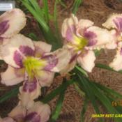 Location: Shady Rest Gardens in NW GeorgiaDate: 2014-06-07