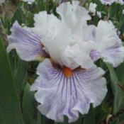 Photo courtesy of Iris Sisters Farm, used with permissi
