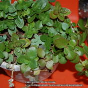 Location: Opp, ALDate: 2015-01-02Various cuttings, potted several months ago.
