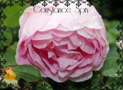 Thumb of 2015-01-12/Cottage_Rose/8f5035