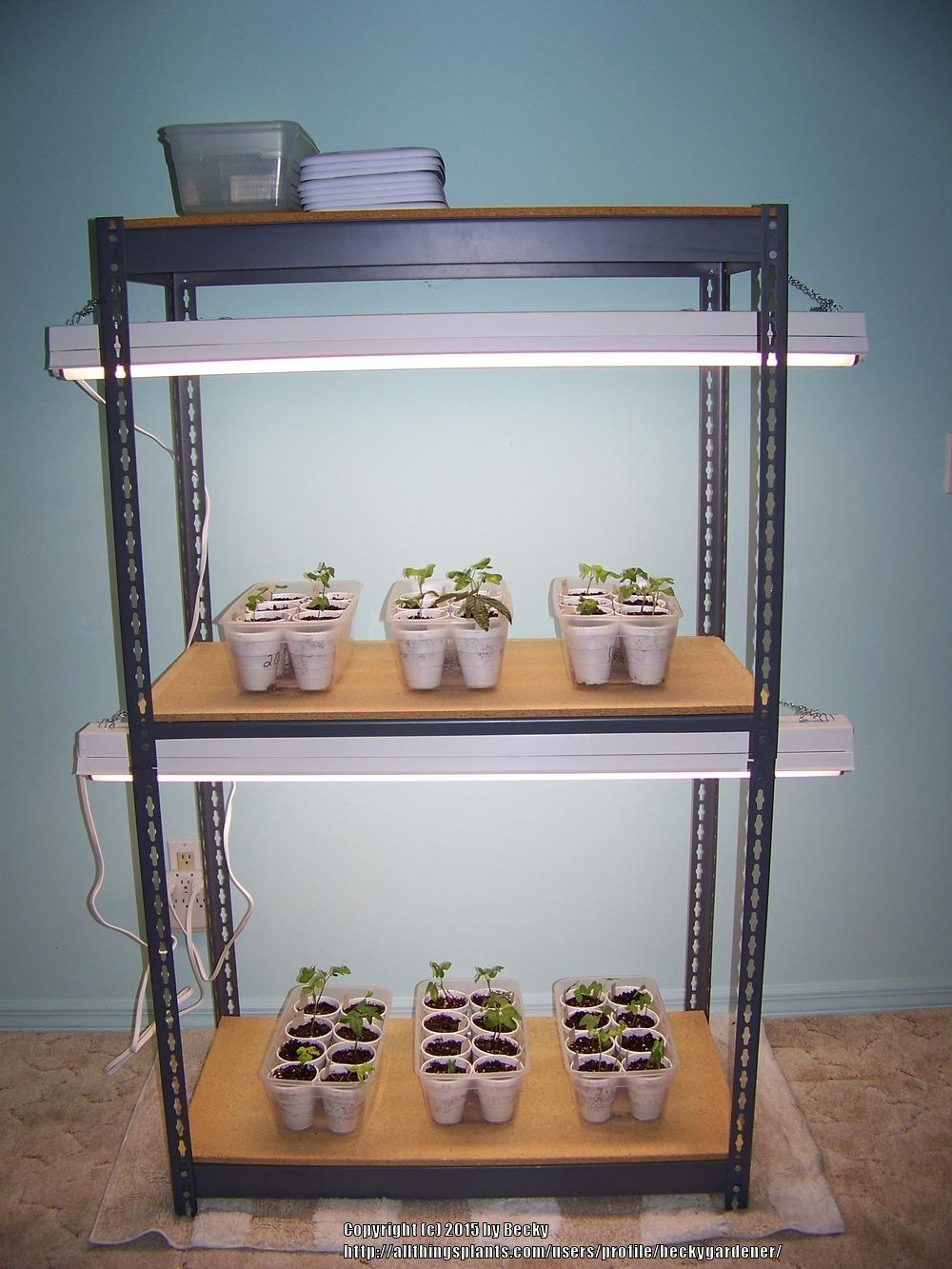Create Your Own Grow-light Shelving Unit