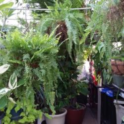 Thumb of 2015-01-19/ShadyGreenThumb/8047b8