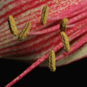 Location: My KitchenDate: 2015-01-17Anthers