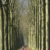 Location: Morlanwelz-Mariemont (Belgium), the European beech walk linking Morlanwelz to MariemontDate: 2007-03-10Photo courtesy of: Jean-Pol GRANDMONT