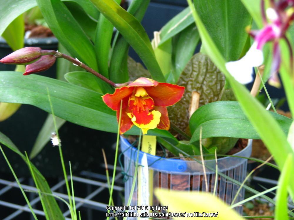 Orchids forum: Orchid Questions for New and Old Growers 2