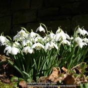 Location: Belsay Hall gardens, Northumberland, UKDate: 2010-03-07
