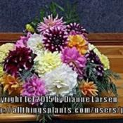 Location: Tenterfield NSW AustraliaDate: Easter 2014Table Arrangement - using my dahlias