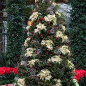 Location: Conservatory, Longwood Gardens, Christmas 2014Photo courtesy of: Tom Potterfield