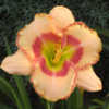 Photo Courtesy of Celestial Daylilies . Used with Permission