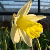 Location: Heighleygate garden centre, NorthumberlandDate: 2010-03-10