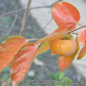 Location: My garden in N E Pa. Date: 2014-11-29