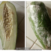 Location: At home - San Joaquin County, CADate: 12Feb2015Store bought green papaya used for cooking.