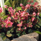 Location: Western Washington at the NW Garden Show 2015Date: 2015-02-13