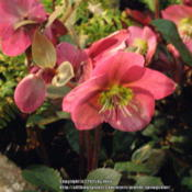 Location: Western Washington at the NW Flower and Garden Show 2015Date: 2015-02-13