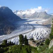 Location: The Aletsch Glacier. Swiss Pines (Pinus cembra) are visible in the foreground.Date: 2007-07-22Photo courtesy of: Jo Simon on Flickr
