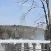 Location: My garden in N E Pa. Date: Tall white pines across the frozen dam holding up even with snow drifts and wind.