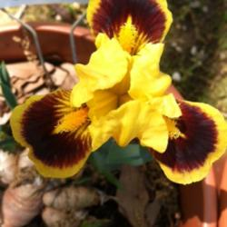 Thumb of 2015-02-26/grannysgarden/c0ad0b