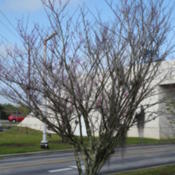 Location: Lutz, FLDate: 2015-03-01Growing along the driveway at the Museum of Science and Industry