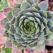 Photo Courtesy of Mountain Crest Gardens. Used with Per