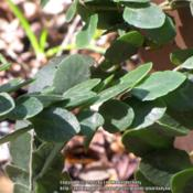 Location: Sugar Mill Botanical Gardens, Port Orange, FloridaDate: 2013-02-01