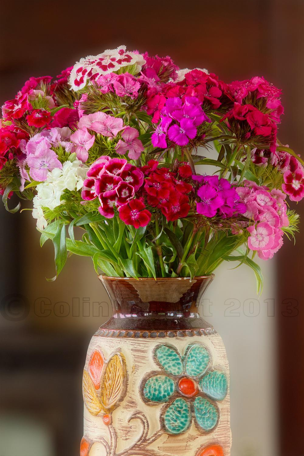 Photo of Sweet William (Dianthus barbatus) uploaded by admin